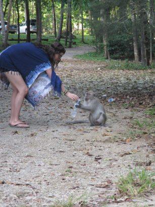 Monkeys are greedy jerks
